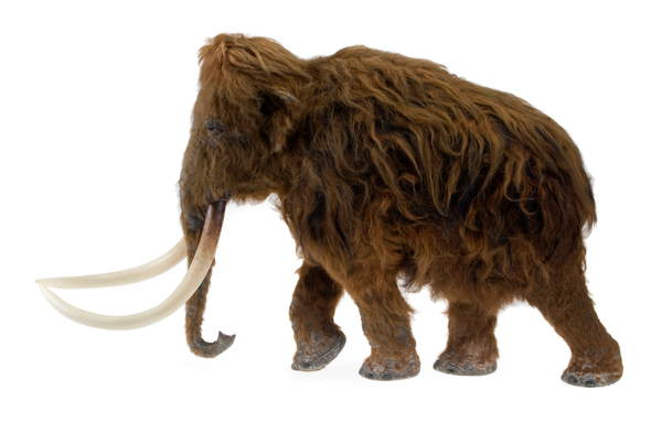 Model of the Ilford Mammoth (photo) / Natural History Museum, London, UK / Bridgeman Images
