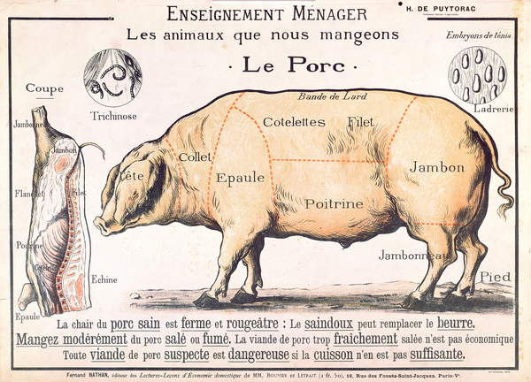 Cuts of Pork, illustration from a French Domestic Science Manual by H. de Puytorac, published by Editions Fernand Nathan, late 19th century (colour litho), French School, (19th century) / Private Collection / © Archives Charmet / Bridgeman Images