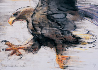 Talons - White tailed Sea Eagle, 2001 (charcoal & conte on paper), Mark Adlington (Contemporary Artist)