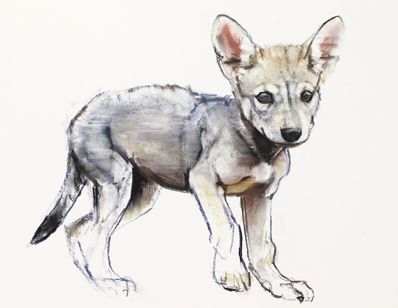 Hesitating Arabian Wolf Pup, 2009 (conte & charcoal on paper), Mark Adlington
