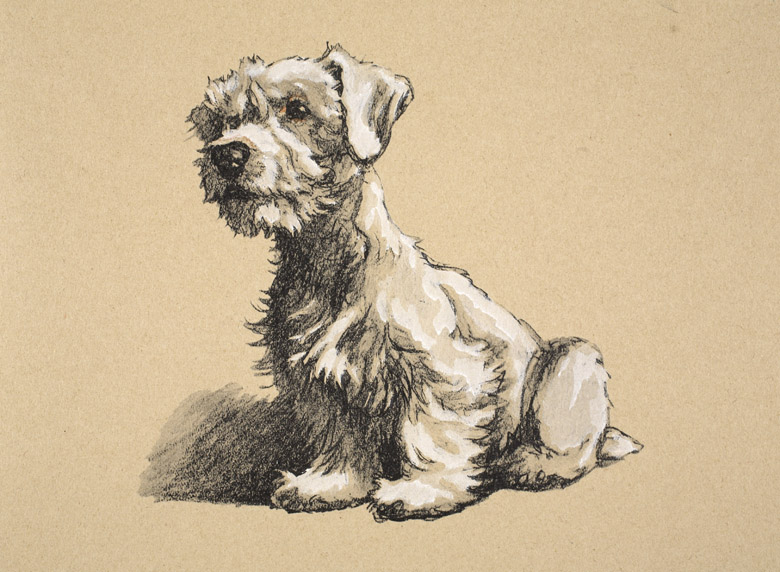 Sealyham, 1930, Illustrations from his Sketch Book used for 'Just Among Friends' by Cecil Aldin (1870-1935) / Private Collection