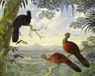 Three Great Curassows in a tropical landscape, Hughes, Nigel (b.1940) / Private Collection