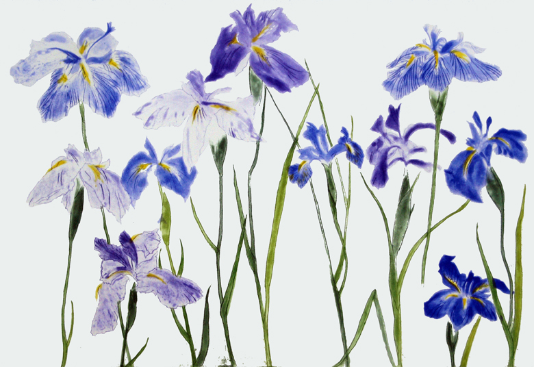 Irises, 2012 by Dame Elizabeth Blackadder (b.1931) Photo © The Scottish Gallery, Edinburgh / Bridgeman Images