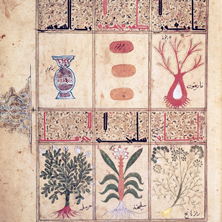 CHT163241 Plants from the 'Treatise of Theriac' after Galien, 1217 (vellum), Islamic/ Bibliotheque Nationale, Paris, Archives Charmet
