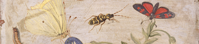 FIT55423 (detail) Insects (oil on copper) by Jan van Kessel the Elder/ Fitzwilliam Museum, University of Cambridge, UK