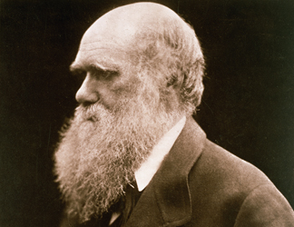 64677 Charles Darwin (1809-82) (photo) by Julia Margaret Cameron (1815-79), Private Collection/ The Stapleton Collection