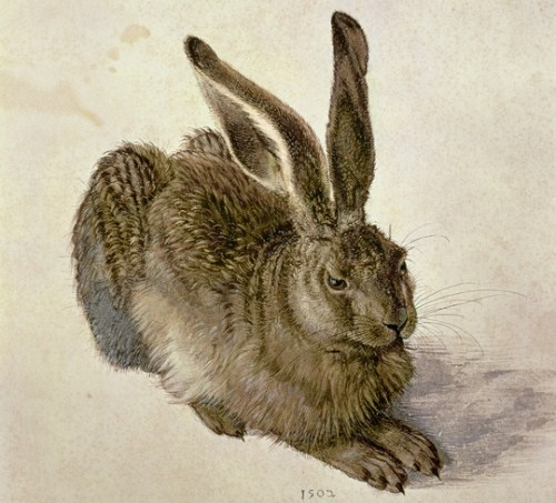 Hare, 1502 (w/c on paper) by Durer or Duerer, Albrecht (1471-1528)